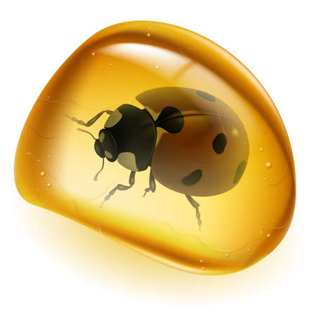 Amber and beetle. Illustration on white background for design Vector