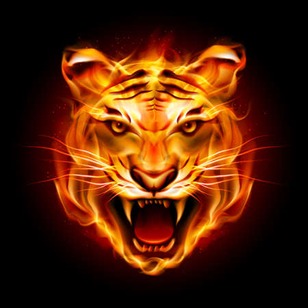 Head of a tiger in tongues of flame. Illustration on black Çizim