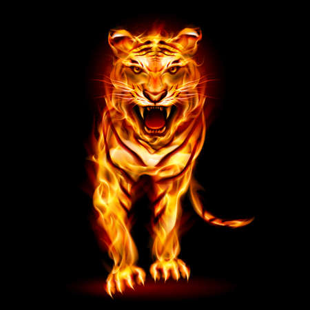 year of the tiger: Fire tiger. Illustration on black background for design