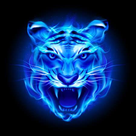 Cabeza de tigre de fuego en azul. Ilustración sobre fondo negro.