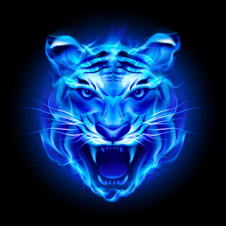 Head of fire tiger in blue. Illustration on black  background. 向量圖像