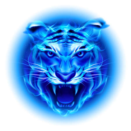Head of fire tiger in blue. Illustration on white  background. Vector