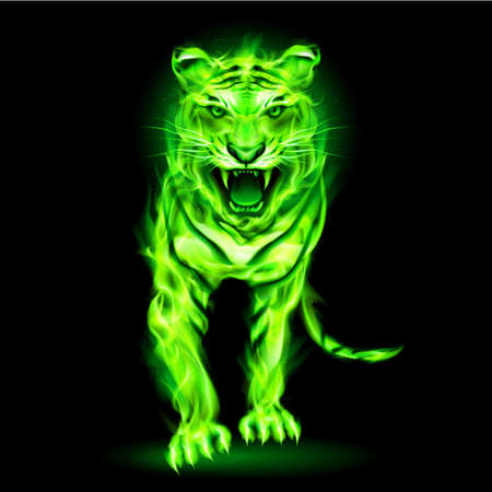 anger abstract: Agressive green fire tiger isolated on black background. Illustration