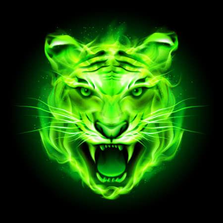 isolated tiger: Capo della tigre aggressiva fuoco verde isolato su sfondo nero.