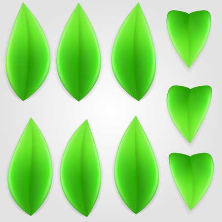 Set of green leaves. Elements of nature.  Illustration
