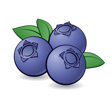 Cartoon blueberry with green leaves on white background. Vector