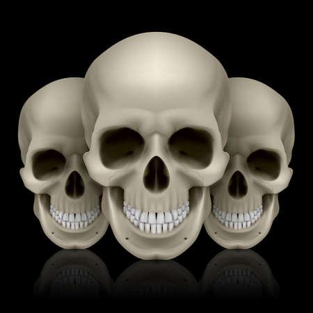 horrid: Illustration of three skulls with reflection on black background