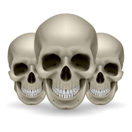 Illustration of three skulls on white background Stock Vector - 27536234