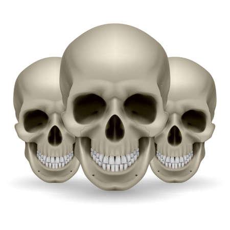 horrid: Illustration of three skulls on white background Illustration
