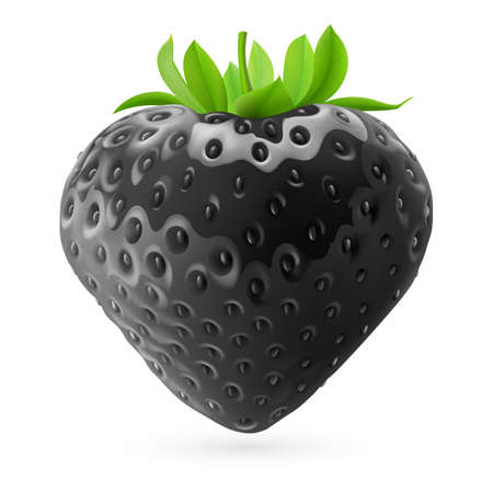 rich in vitamins: Realistic illustration of black strawberry on white background