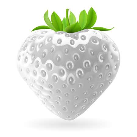 Realistic illustration of white strawberry on white background