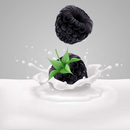 Two appetizing blackberries falling into milk with splashes