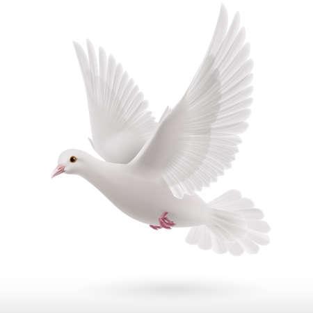 평화의 상징으로 흰색 배경에 흰 비둘기 비행