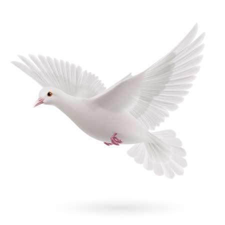 흰색 배경에 현실적인 흰 비둘기. 평화의 상징