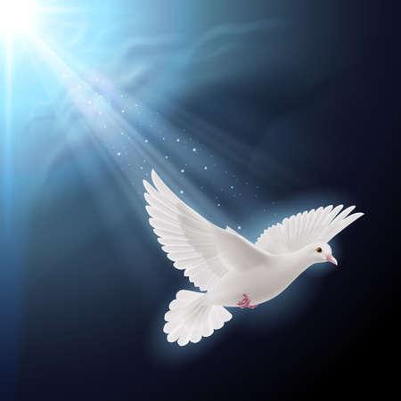 simbolo della pace: Colomba bianca vola in luce del sole contro il cielo blu scuro come simbolo di pace