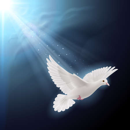 hope symbol of light: White dove flying in sunlight against dark  blue sky as symbol of peace
