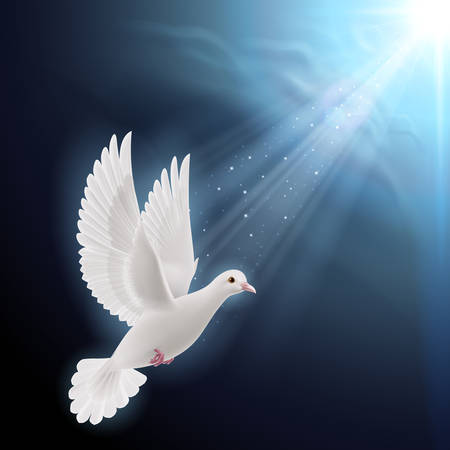 White dove flying in sunlight against dark  blue sky as symbol of peace and hope Vector