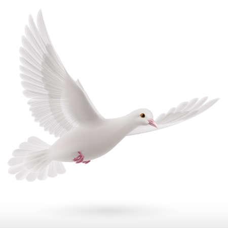 divine: Witte duif vliegen op witte achtergrond. Symbool van de vrede