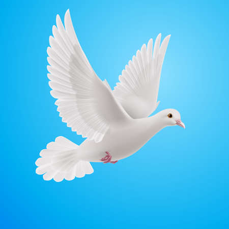 Realistic white dove on blue background. Symbol of peace Illustration