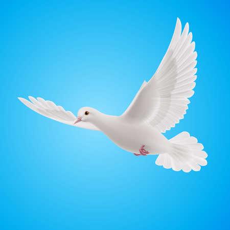 Vliegende witte duif op een blauwe achtergrond. Symbool van vrede