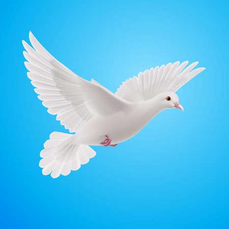 hopeful: Realistic white dove on blue sky background. Symbol of peace