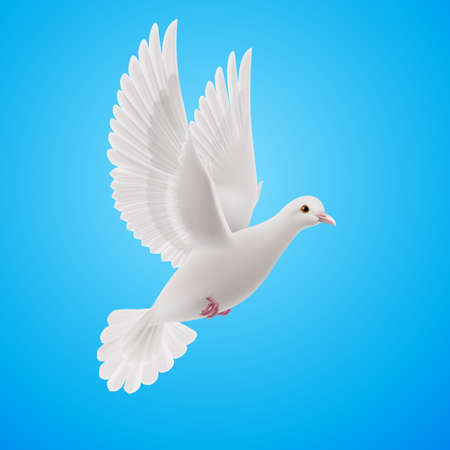 purity: Realistic white dove flying on blue sky background. Symbol of peace