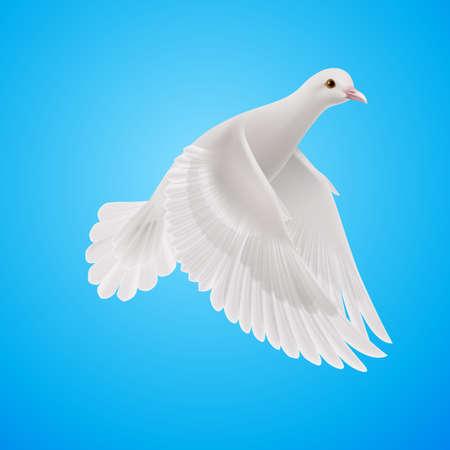 青い空を背景に飛ぶ飛ぶ白い鳩。平和のシンボル