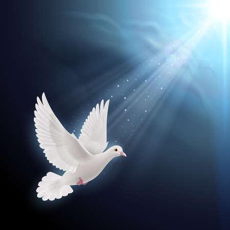 espiritu santo: Paloma blanca volando en rayos del sol contra el cielo azul oscuro. Símbolo de la paz