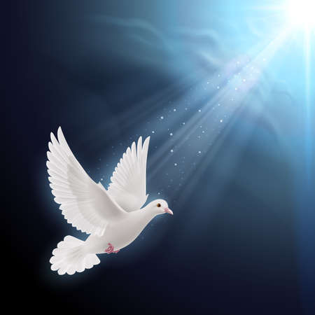 White dove flying in sun rays against dark  blue sky. Symbol of peace Vector