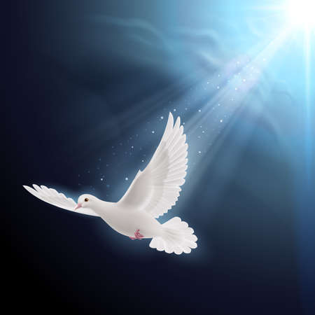 White dove flying in sunlight against dark  blue sky. Symbol of peace