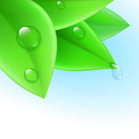 Pure transparent water drops on green leaves Vector