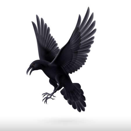 Aggressive black raven isolated on white background  Illustration