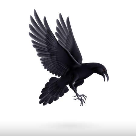 흰색 배경에 격리 된 비행 검은 까마귀의 그림