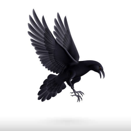 Illustratie van vliegende zwarte raaf op een witte achtergrond