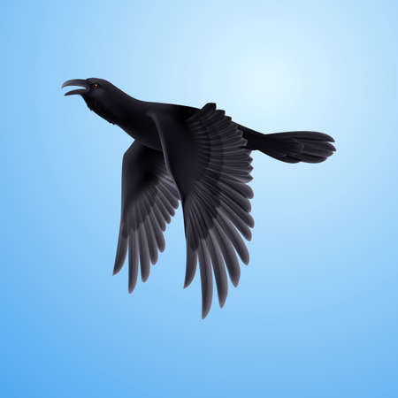 corax: Flying black raven on blue sky background