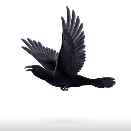 blackbird: Flying black raven isolated on white background  Illustration
