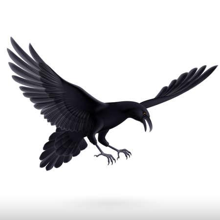 blackbird: Illustration of aggressive black raven isolated on white background