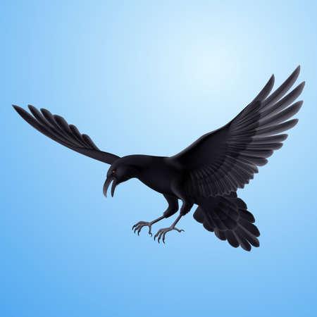 black beak: Aggressive flying raven on blue sky background