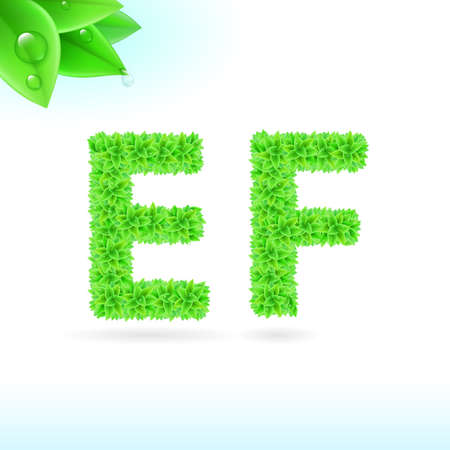 e white: Sans serif font with green leaf decoration on white background. E and F letters Illustration