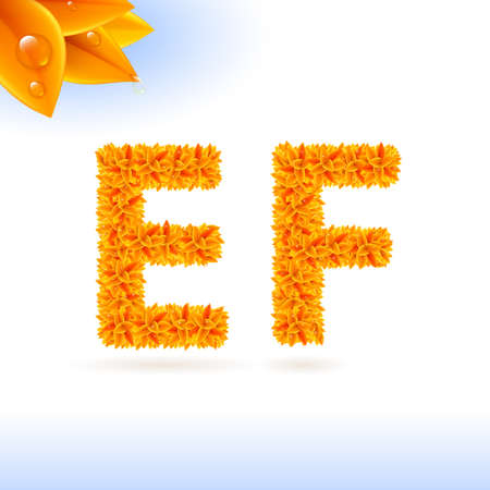 sans: Sans serif font with orange leaf decoration on white background. E and F letters