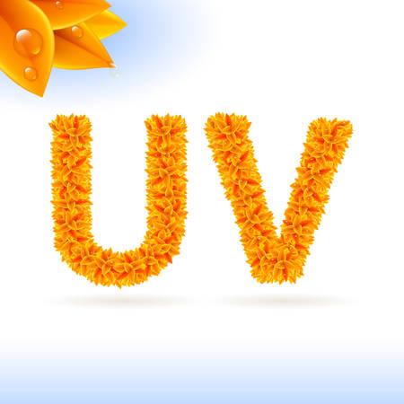 v alphabet: Sans serif font with orange leaf decoration on white background. U and V letters