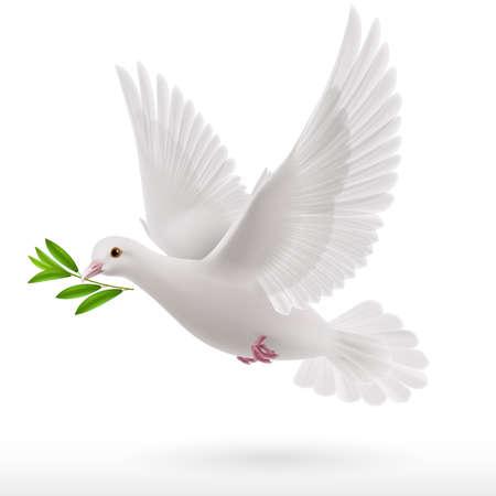 비둘기의 부리에 녹색 나뭇 가지 비행