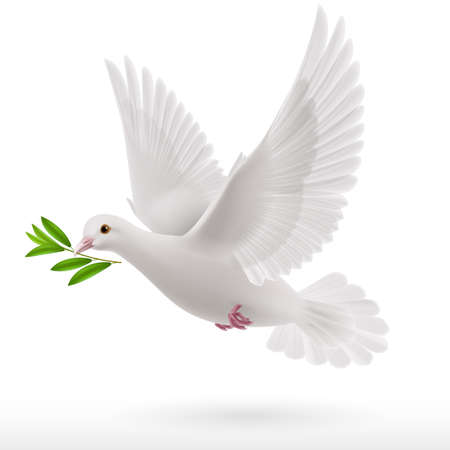 dove flying with a green twig in its beak Ilustração