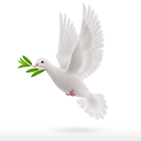 Dove of peace flying with a green twig in  beak on white background Vector