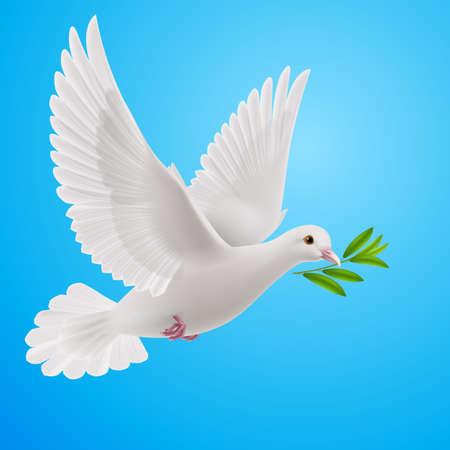 оливки: Голубь мира летит с зеленым ветку после наводнения на синем фоне