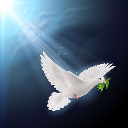 white dove: Dove of peace flying with a green twig after flood on dark background