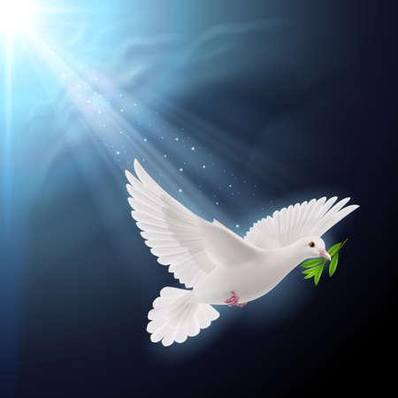 paloma blanca: Paloma de la paz volando con una ramita verde despu�s de las inundaciones en el fondo oscuro Vectores