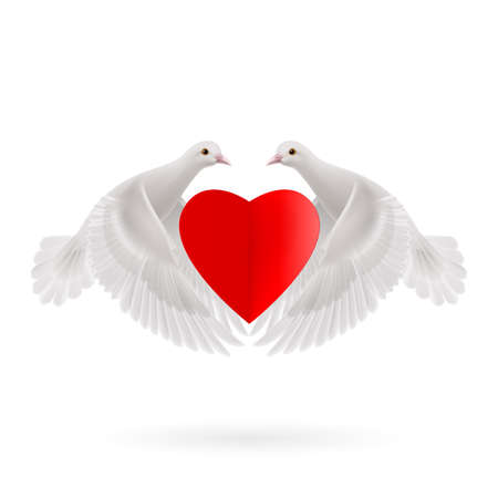 White two doves holds red heart in wings Vector
