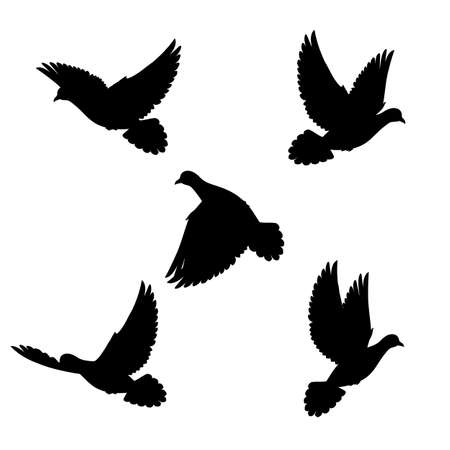 goshawk: Five silhouette black doves fly in space