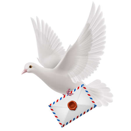air mail: White pigeon fly with mail in beak